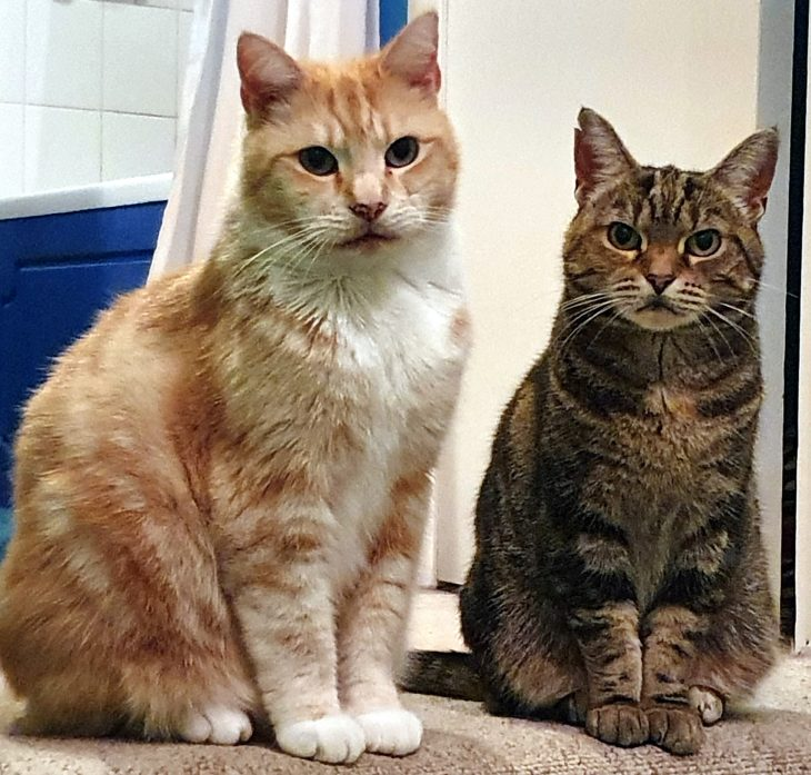 Image of the two cats, Trixie and Simba